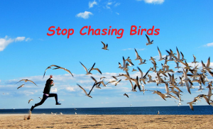 Chasing birds Downunder Marketing